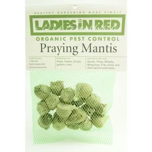 LADIES IN RED Twenty Praying Mantis Egg Cases for Organic Control of Yard and Garden Pests 243