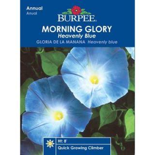 Burpee Morning Glory Heavenly Blue Seed 36767