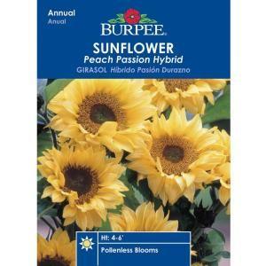 Burpee Sunflower Peach Passion Hybrid Seed 31703