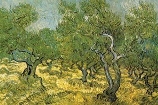 Vincent Van Gogh   Olivenhain Selbstklebende Fototapete Poster Tapete (180 x 120cm) Küche & Haushalt