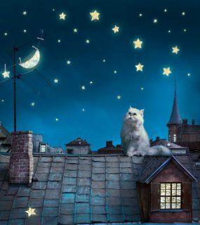 Fototapete Tapete Katze Sternenhimmel Dach bei Nacht Foto 180 x 202 cm: Küche & Haushalt