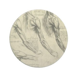 Arm and Shoulder Muscles Anatomy Leonardo da Vinci Coaster