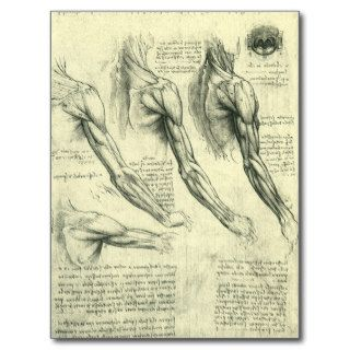 Arm and Shoulder Muscles Anatomy Leonardo da Vinci Postcard