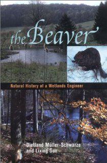 The Beaver Natural History of a Wetlands Engineer (Comstock books) (9780801440984) Dietland Muller Schwarze, Lixing Sun Books
