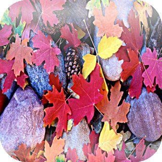 Colorful Maple Leaves And Rocks Live HD LWP: Appstore for Android