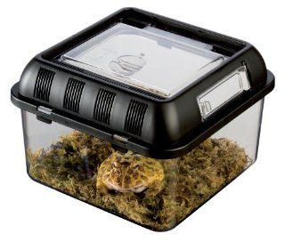 Exo Terra Breeding Box, Small : Reptile Houses : Pet Supplies