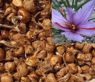 15 Pcs Saffron Bulbs   Get Beautiful Flowers and Your Own Spice (Fresh 2014 Bulbs)  Flowering Plants  Patio, Lawn & Garden