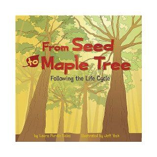 From Seed to Maple Tree: Following the Life Cycle (Amazing Science: Life Cycles): Laura Purdie Salas, Shelly Lyons, Jeff Yesh, Melissa Kes, Nathan Gassman, Lori Bye: 9781404849310:  Kids' Books