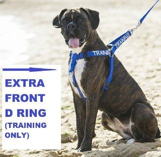 """TRAINING"" Blue Color Coded Non pull Dog Harness With Extra Front 'D' Ring (Do Not Disturb) PREVENTS Accidents By Warning Others of Your Dog in Advance! : Pet Halter Harnesses : Pet Supplies"