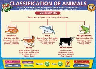 This Comprehensive Pc/Mac Ready Interactive Whiteboard Chart Provides An Overview Of The Different Vertebrates And Invertebrates And Their Associated Characteristics   Science Interactive Whiteboard Chart   Classification of Animals : Everything Else