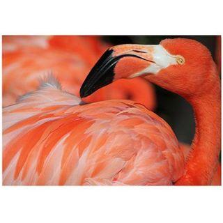 "Trademark Fine Art ""Pink Flamingo"" Canvas Art by Patty Tuggle"