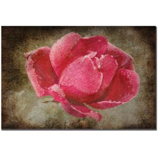 Lois Bryan Frosted Rose Canvas Art   Shopping