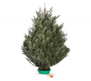 Del Week 11/28 Trinity Tree Fresh Fraser Table Top 30 36 Tree —