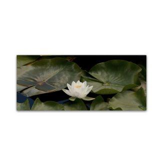 Kurt Shaffer One White Water Lily Canvas Art   16975520