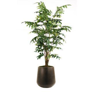 Distinctive Designs T 513 7 F90S 7 Fishtail Palm Tree in Small Round Black Outdoor Fiberglass Planter