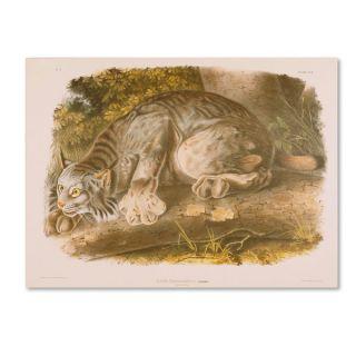 John James Audubon Canada Lynx Canvas Art   15836844