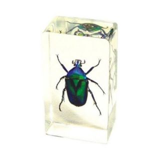 Ed Speldy East PW201 Real Bug Paperweight Regular Medium Green Chafer Beetle